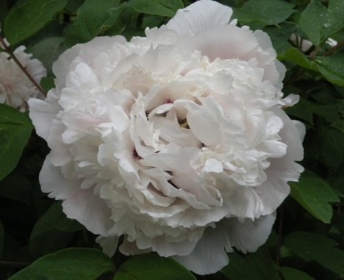 the jade peony book liang outsider 2018-3-8 e definition at chineseyablacom, a free online dictionary with english, mandarin chinese, pinyin, strokes look it up now.