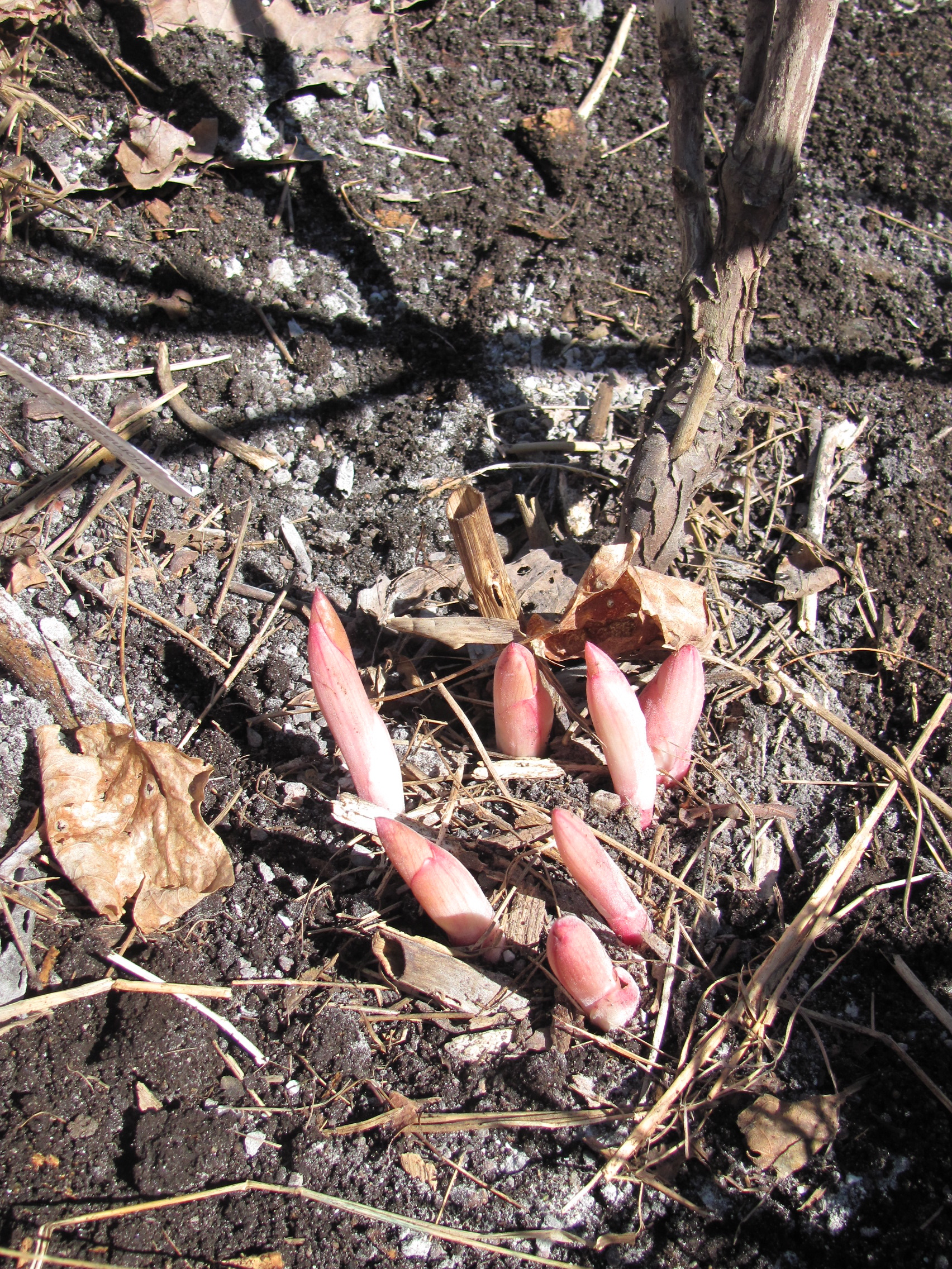 how to kill sprouting tree roots