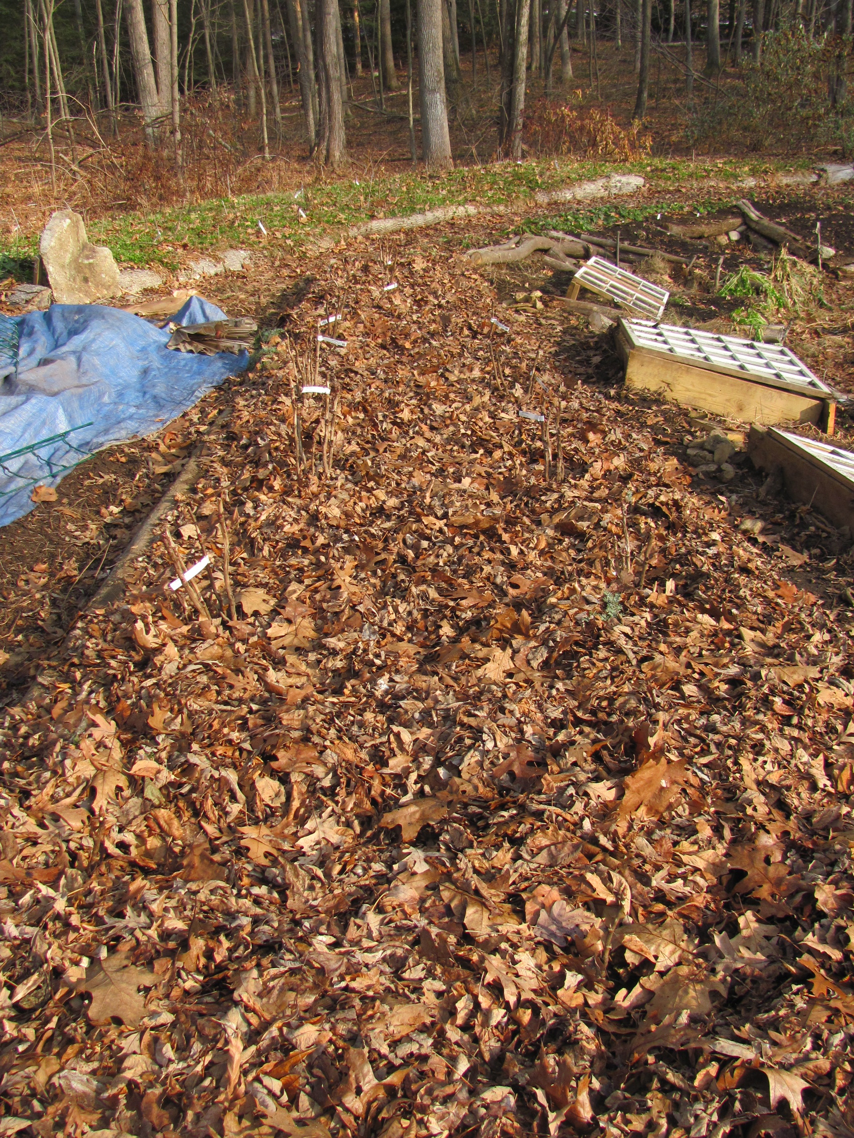 Mulched Leaves Garden