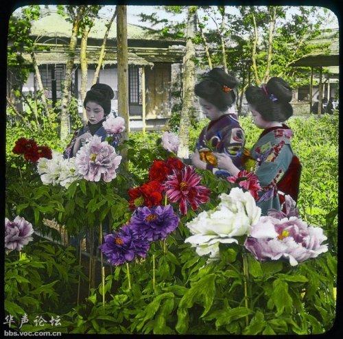 peonies in tokyo circa 1910
