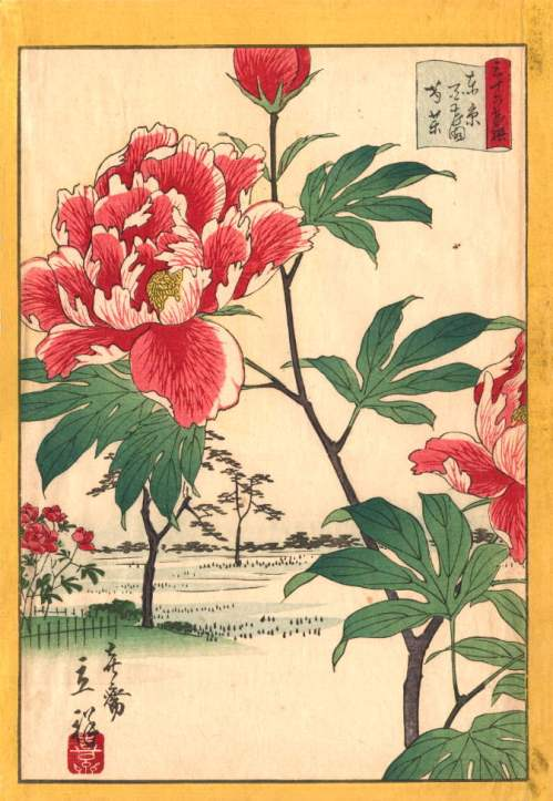 Peonies at Hyakken an 1866 woodblock print by Utagawa Shigenobu depicts the tree peonies at a famous public garden in Tokyo.