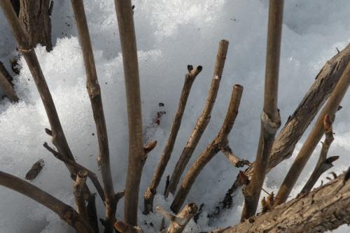 Dead wood at base
