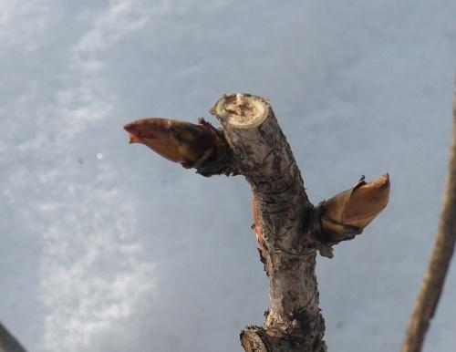 good pruning cut