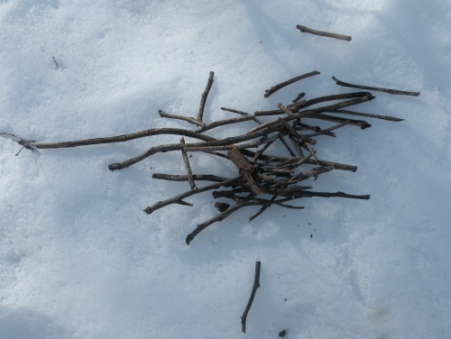 Remove pruning from garden, could potentially harbor fungal spoors.