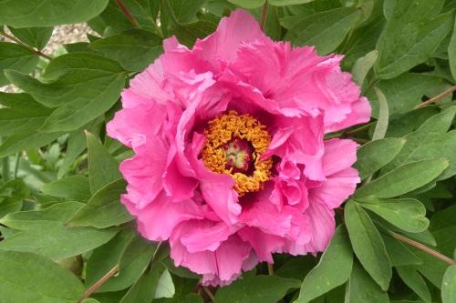 'Peach Blossom Complexion'