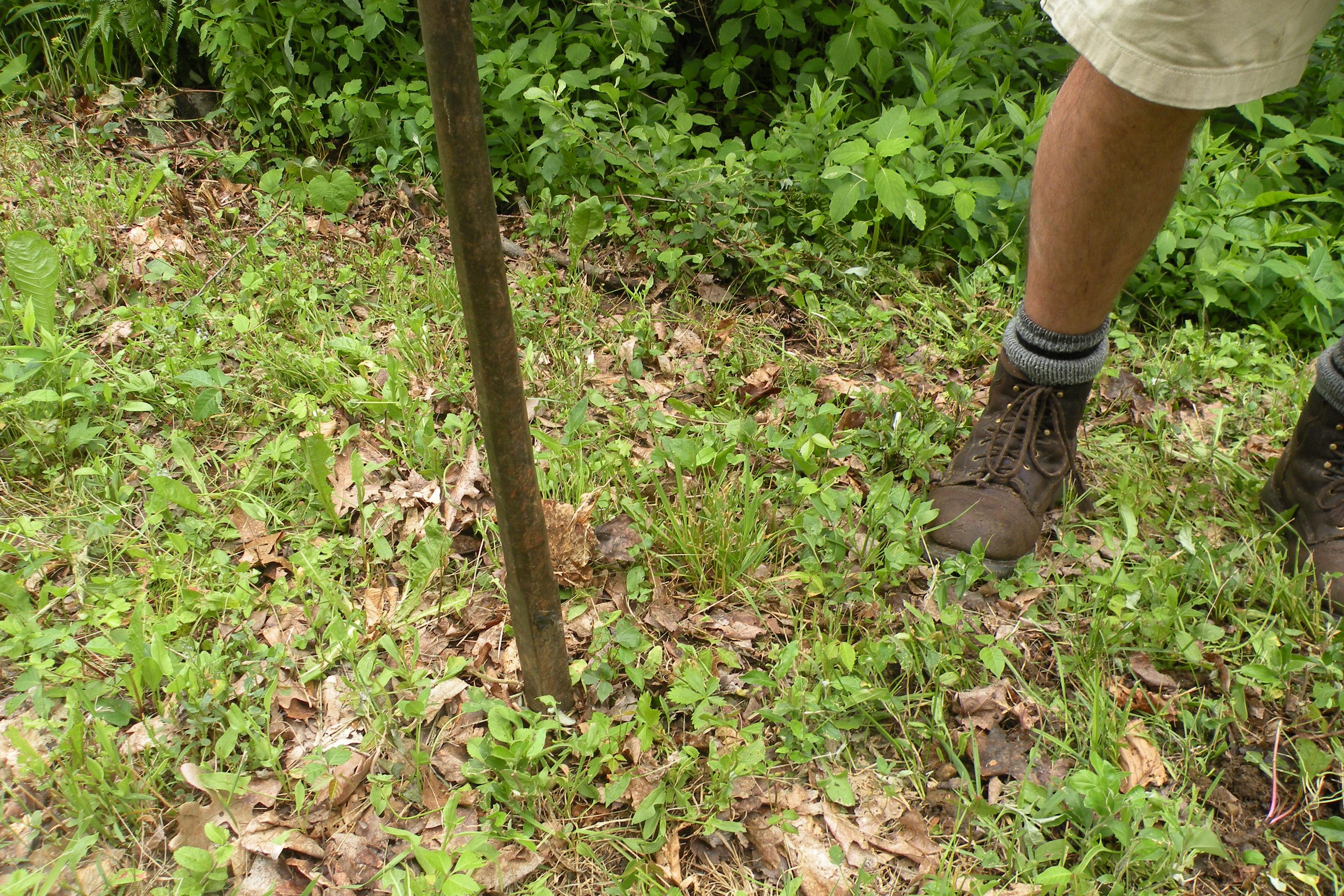 ¿Puedo plantar pasto en suelo rocoso? | Inicio Guías | Puerta SF