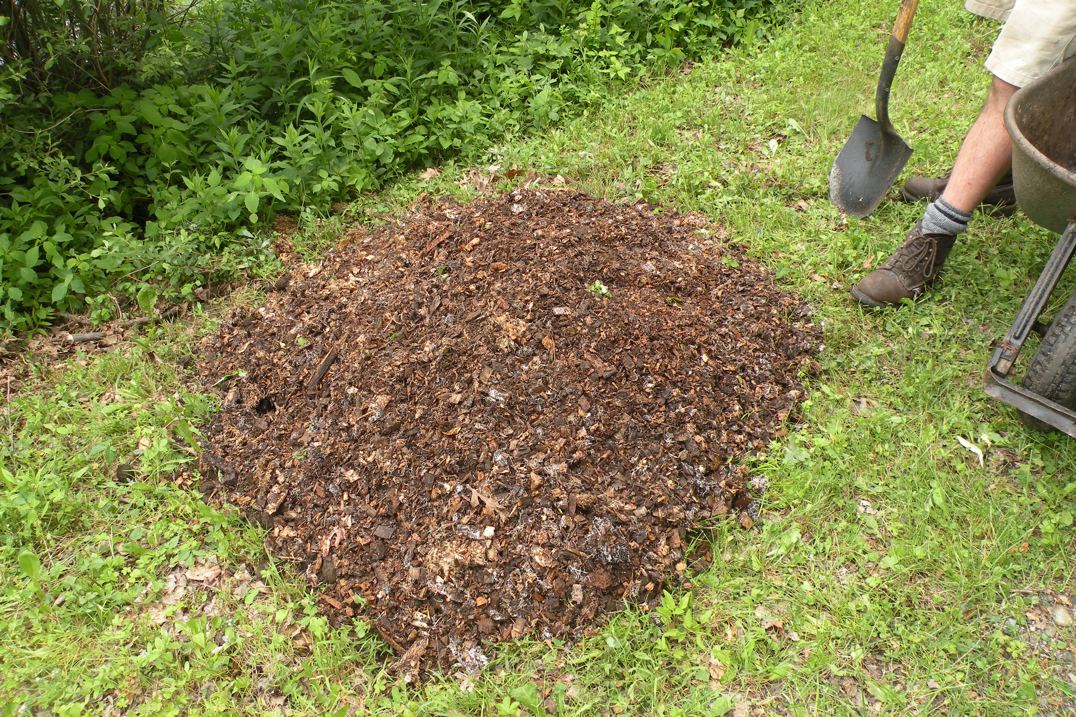 Preparing a new peony bed for fall planting in lawn or