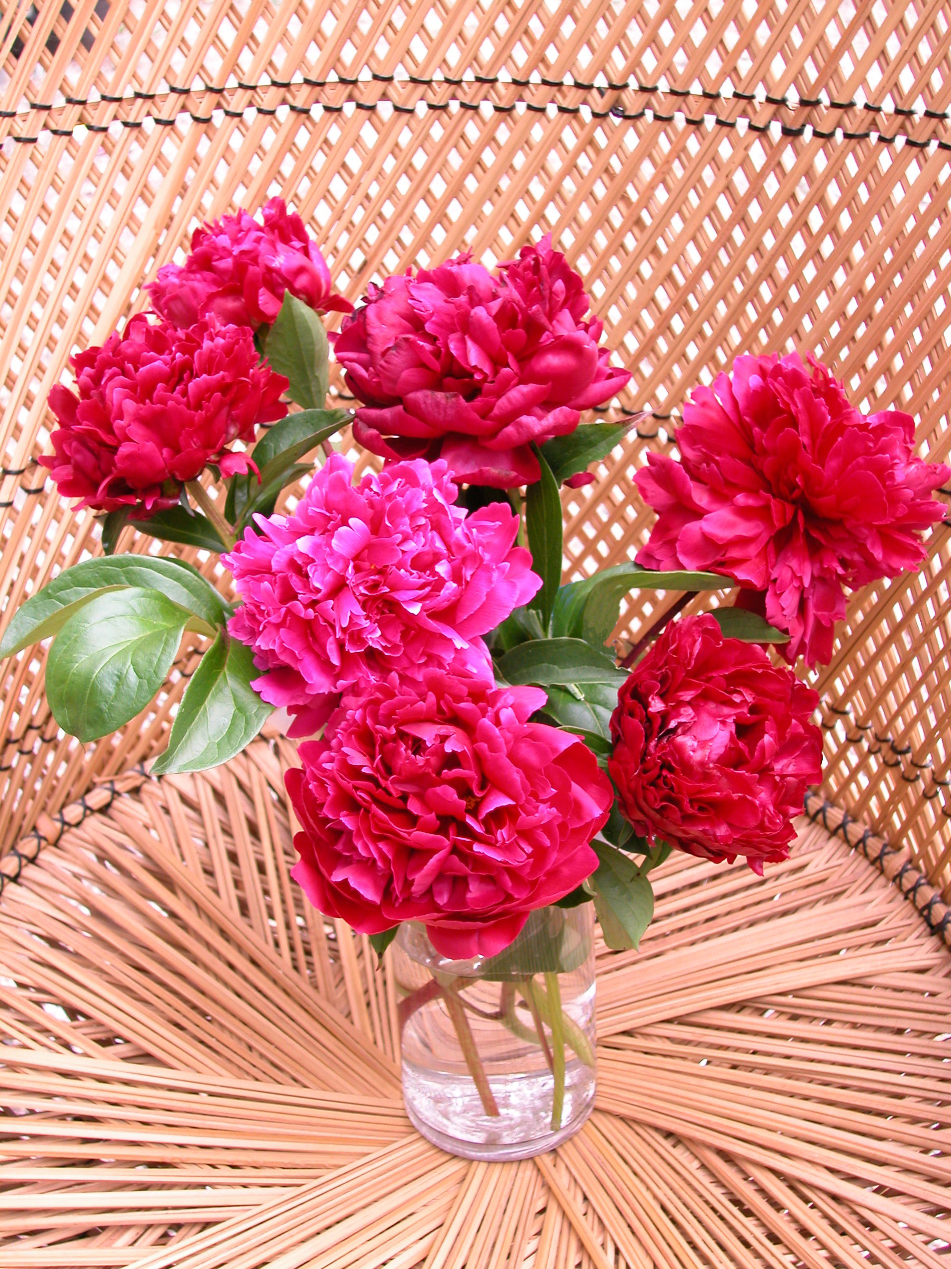 devoting an area of the peony garden for cutting is a way to enjoy the luxerious - Red Garden Design