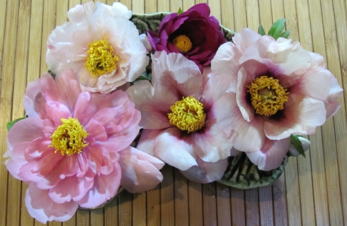 """We are often asked about cutting tree peony flowers. You can do so, but cut short, 6"""" green stems before the flower is fully open. For display indoors, tree peony blossoms are best cut and floated in a bowl of water. One flower is a complete arrangement!"""