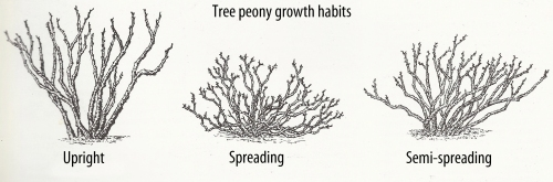 tp growth habits1