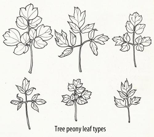 tp leaf types1