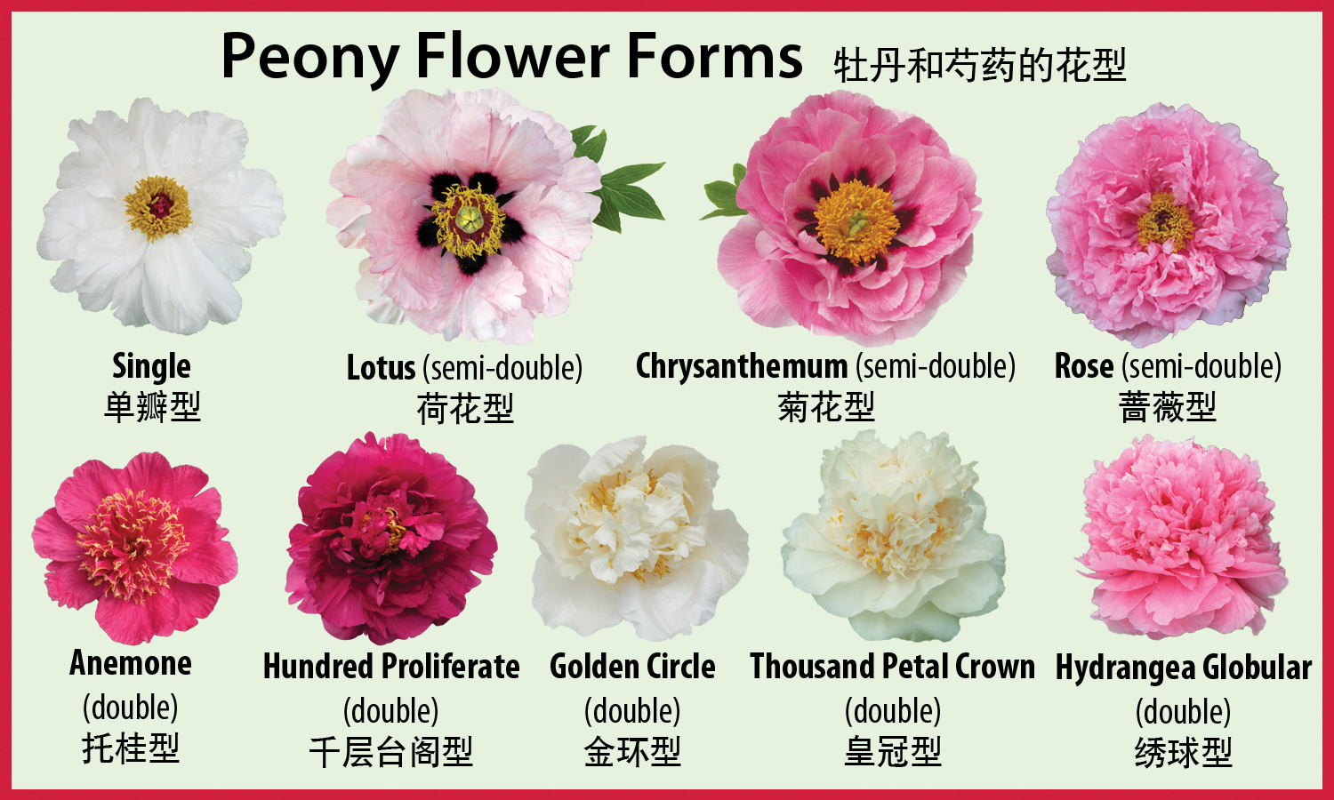 Peony flower forms crickethillgarden the classical chinese system for identifying peony flower forms mightylinksfo