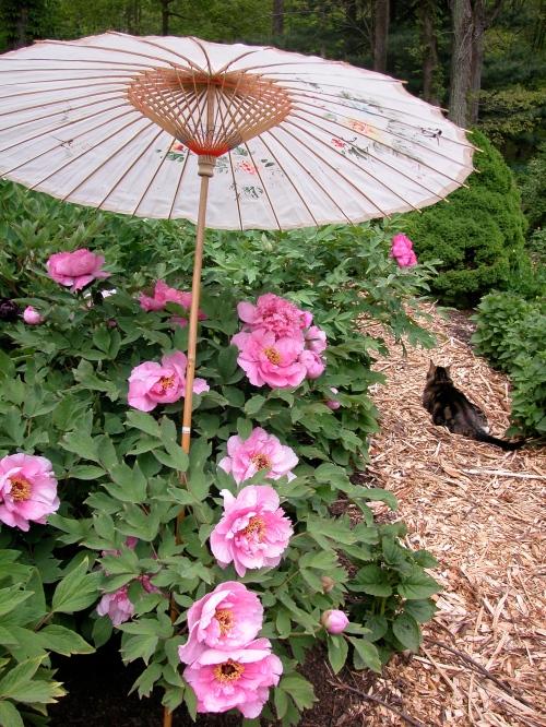 Peach Blossom Complexion