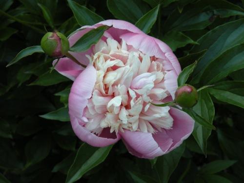 'Lotus and Moss'