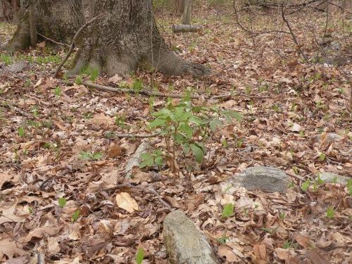 seedlings in the woods.jpg